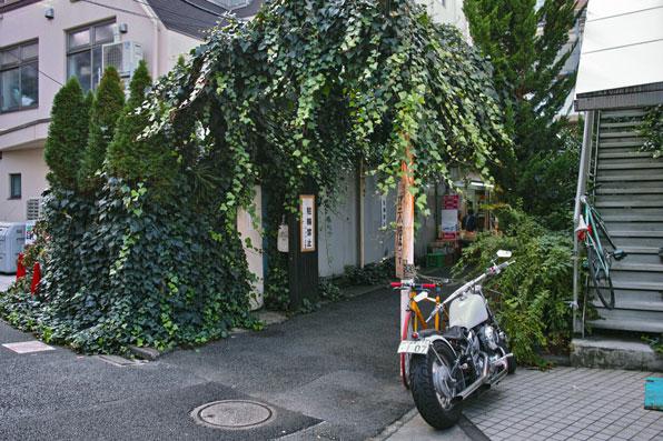 bP1M1904.jpg